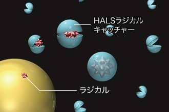 HALSラジカルキャッチャー